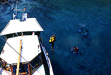 Diving Tour